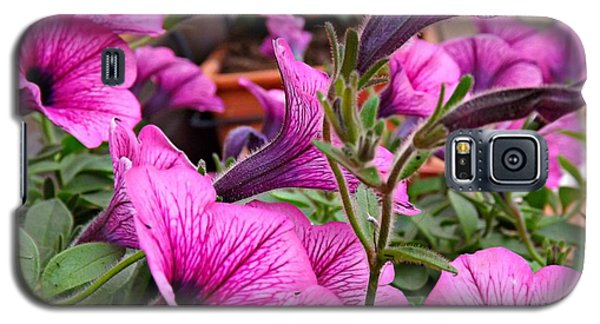 Galaxy S5 Case featuring the photograph Trailing Petunias by Clare Bevan
