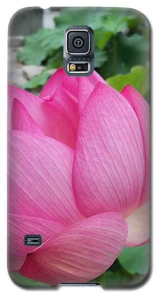 Tranquil Lotus  Galaxy S5 Case by Lingfai Leung