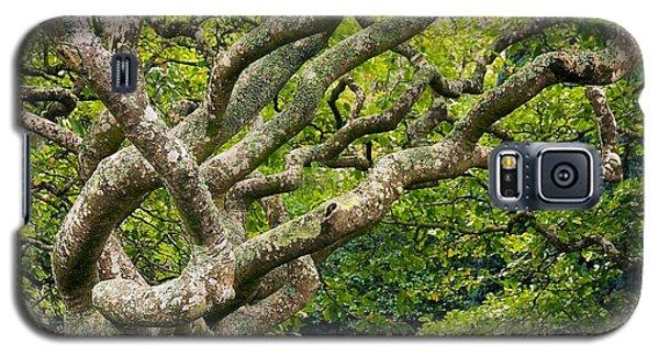 Tree #1 Galaxy S5 Case by Stuart Litoff