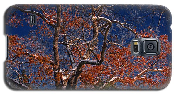 Galaxy S5 Case featuring the photograph Tree Against Dark Sky by Andy Lawless