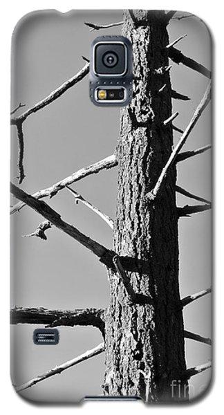 Tree Ancestor Galaxy S5 Case