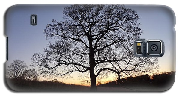 Tree At Dawn Galaxy S5 Case by Michael Porchik