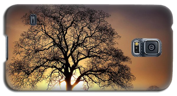 Tree At Sunrise In The Fog Galaxy S5 Case