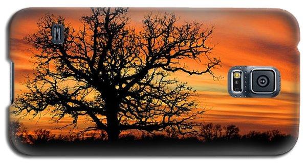 Tree At Sunset Galaxy S5 Case by Elizabeth Budd