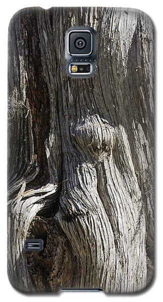Galaxy S5 Case featuring the photograph Tree Bark No. 3 by Lynn Palmer
