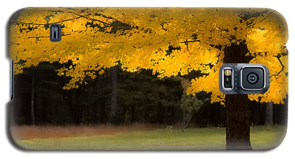 Tree Canopy Glowing In The Morning Sun Galaxy S5 Case by Jeff Folger