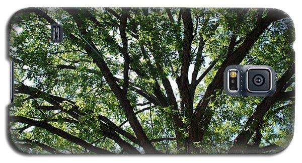 Tree Canopy Sunburst Galaxy S5 Case