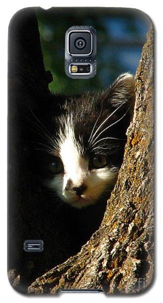 Tree Cat Galaxy S5 Case by Greg Patzer