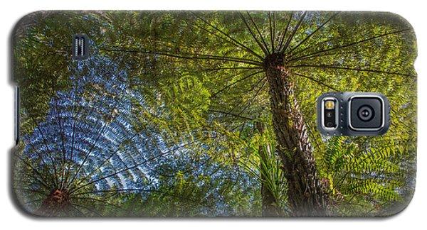 Tree Ferns From Below Galaxy S5 Case