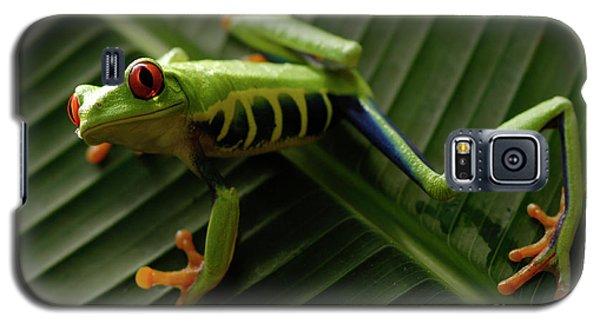 Tree Frog 16 Galaxy S5 Case