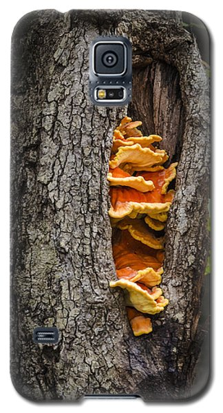 Tree Fungus Galaxy S5 Case