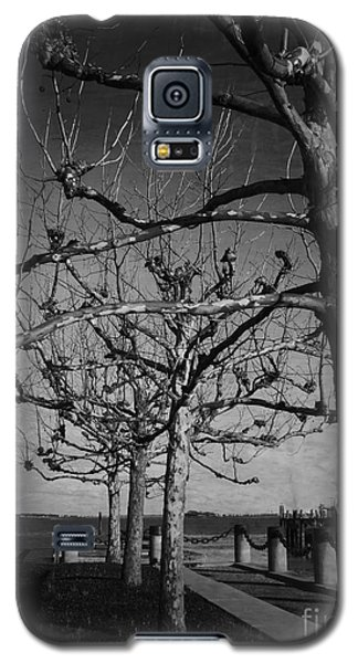 Tree In A Row  Galaxy S5 Case by Andrea Anderegg