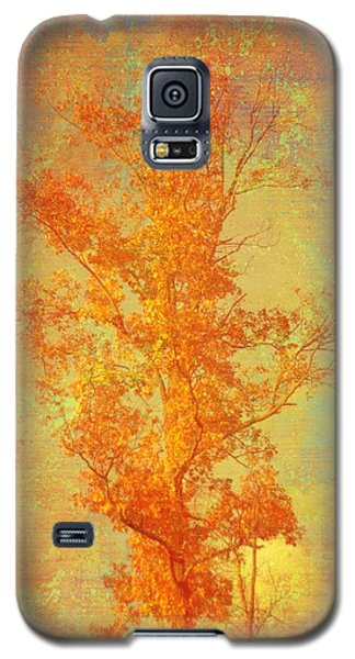 Tree In Sunlight Galaxy S5 Case by Suzanne Powers