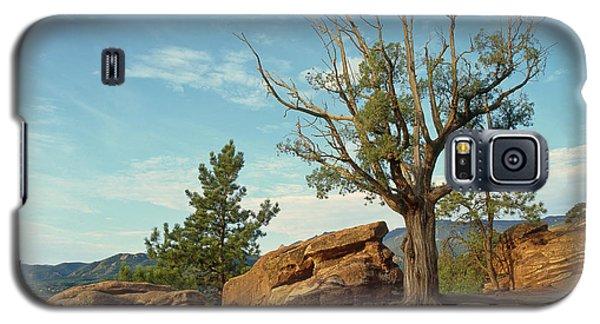 Tree In The Rocks Galaxy S5 Case