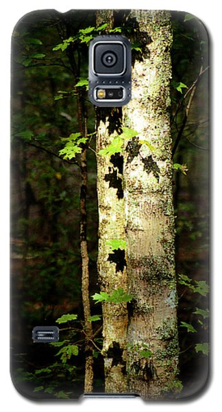 Tree In The Woods Galaxy S5 Case