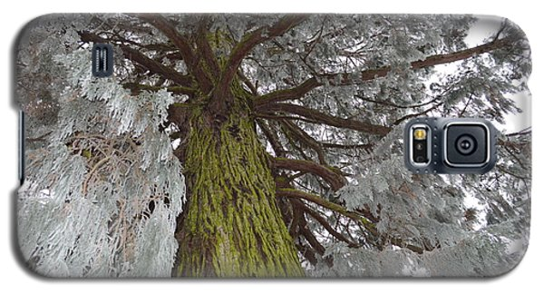 Galaxy S5 Case featuring the photograph Tree In Winter by Felicia Tica