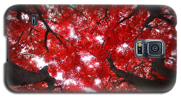 Galaxy S5 Case featuring the photograph Tree Light - Maple Leaves Fall Autumn Red by Jon Holiday
