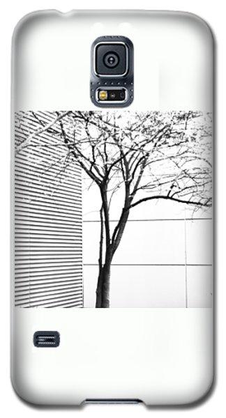 Tree Lines Galaxy S5 Case by Darryl Dalton