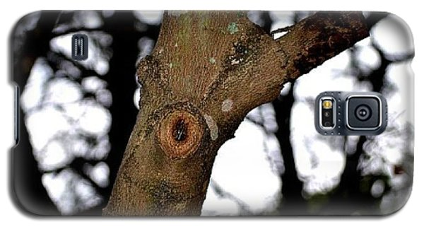 Galaxy S5 Case featuring the photograph Tree Observation by Tara Potts