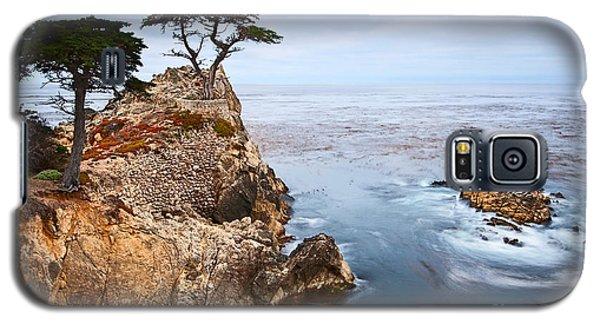 Tree Of Dreams - Lone Cypress Tree At Pebble Beach In Monterey California Galaxy S5 Case by Jamie Pham