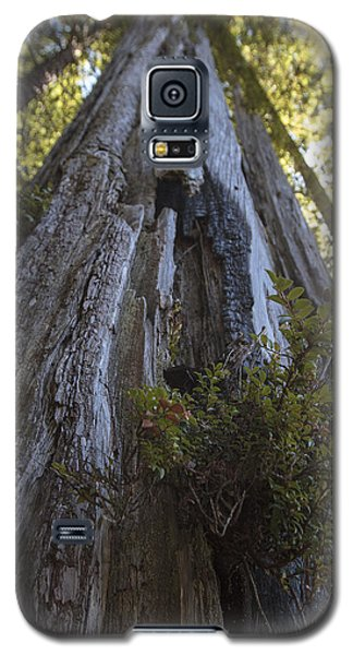 Tree Of Mystery #1 Galaxy S5 Case
