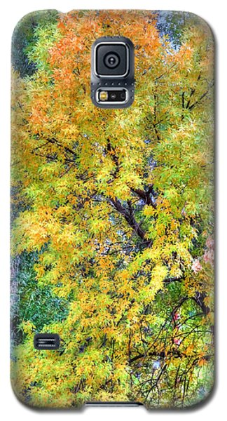 Galaxy S5 Case featuring the photograph Tree On Fountain Creek by Lanita Williams