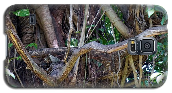Galaxy S5 Case featuring the photograph Tree by Rafael Salazar