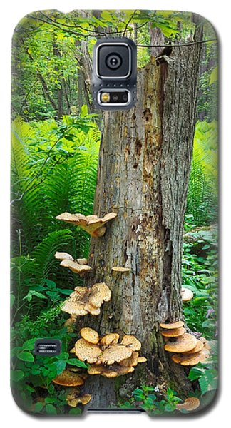 Tree Remnant Galaxy S5 Case
