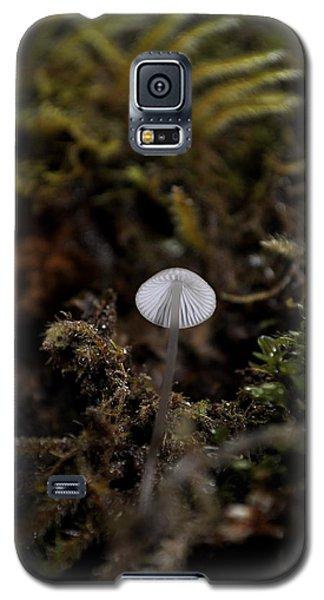 Tree 'shroom Galaxy S5 Case by Cathy Mahnke