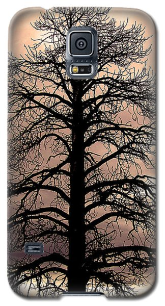 Tree Silhouette Galaxy S5 Case by Laurel Powell