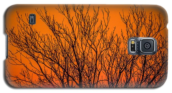 Tree Silhouetted By Irish Sunrise Galaxy S5 Case