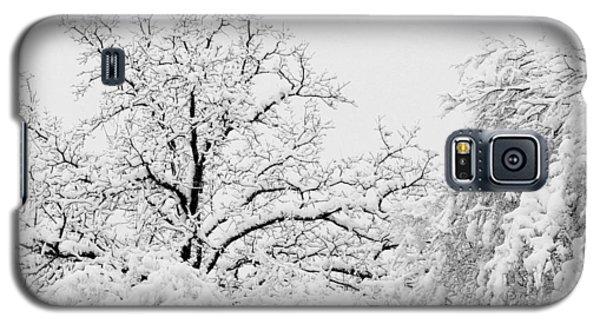 Tree Snow Galaxy S5 Case