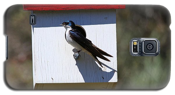 Tree Swallow Home Galaxy S5 Case by Mike  Dawson