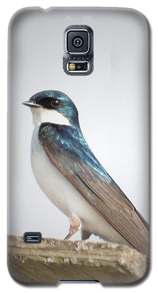 Tree Swallow Portrait Galaxy S5 Case by Anita Oakley