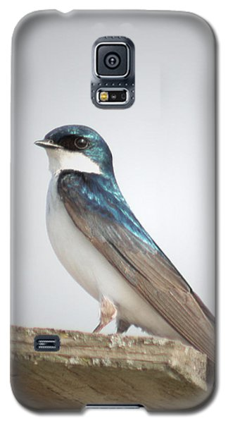 Galaxy S5 Case featuring the photograph Tree Swallow Portrait by Anita Oakley