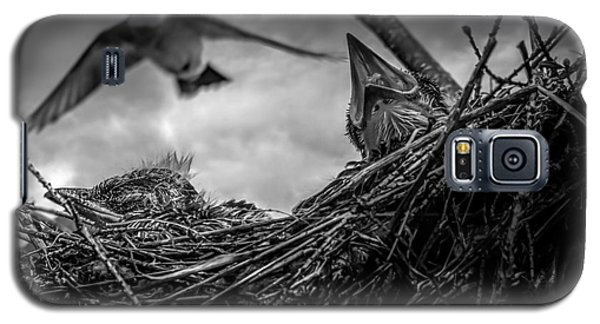 Tree Swallows In Nest Galaxy S5 Case by Bob Orsillo