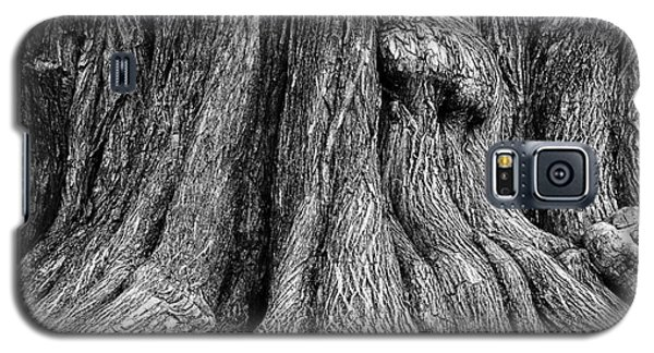 Tree Trunk Closeup Galaxy S5 Case