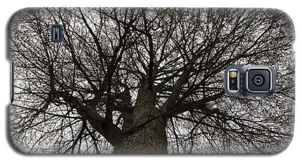 Tree Web Galaxy S5 Case
