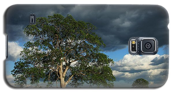 Tree With Storm Clouds Galaxy S5 Case