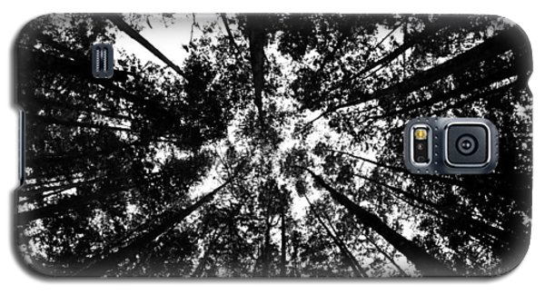 Trees Above Me Galaxy S5 Case by Daniel Woodrum