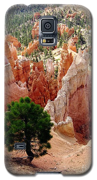Galaxy S5 Case featuring the photograph Tree's Eye View by Meghan at FireBonnet Art