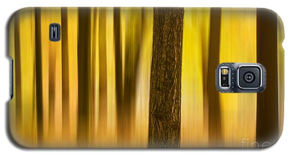 Trees In Autumn Forest Galaxy S5 Case