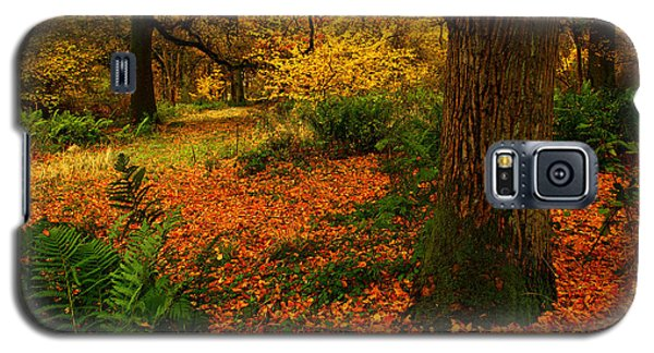 Trees In Autumn Woodland Galaxy S5 Case