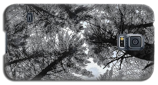 Trees In Winter Galaxy S5 Case