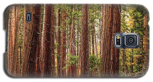 Trees Of Yosemite Galaxy S5 Case by Muhie Kanawati