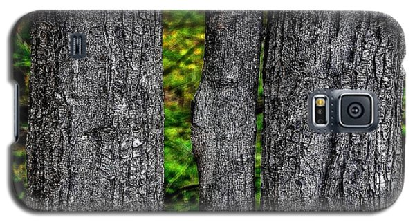 Trees Galaxy S5 Case
