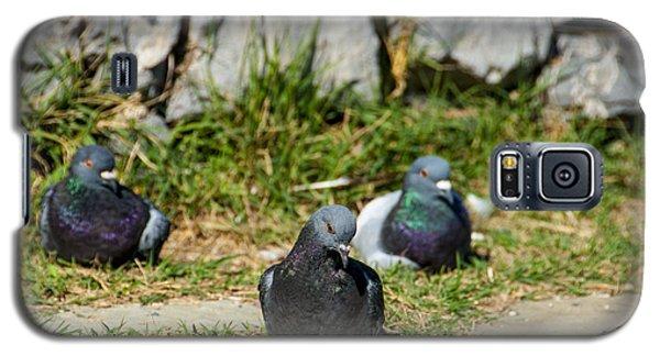 Tres Pigeons Galaxy S5 Case