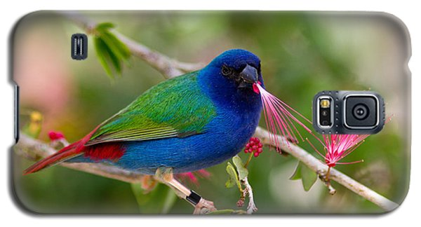 Galaxy S5 Case featuring the photograph Tricolor Parrot Finch by Les Palenik