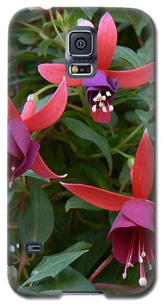 Galaxy S5 Case featuring the photograph Trifecta by Michael Porchik