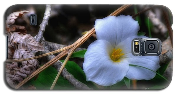 Galaxy S5 Case featuring the photograph Trillium On County C by Trey Foerster